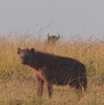 hyena 3